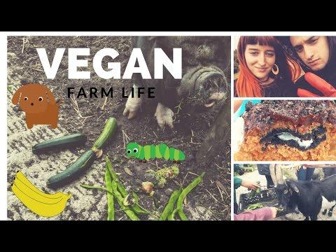 VEGAN Farm Life :)