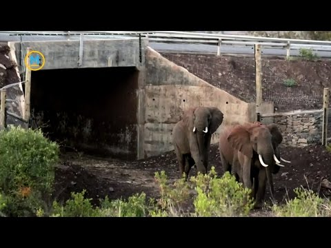 Innovative animal crossings from around the world | Your Morning