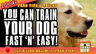 Dog Training Fresno | Free Dog Training Tips | Dog Obedience Training Fresno, Ca