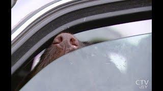 Собак заперли в авто на 2 недели. Как они выжили?