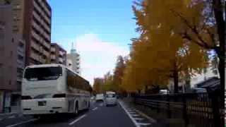 堀川通の銀杏並木