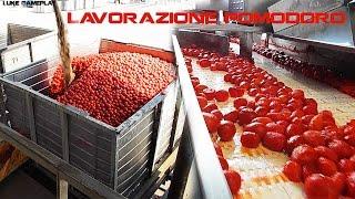 Virtual-Tour Lavorazione Pomodoro in Industria   Processing Tomato Industry