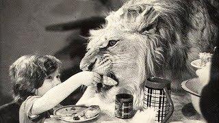 Co stało się z rodziną, która trzymała w domu ogromnego lwa