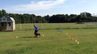 Overland Park Dog Training