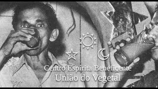 Episode 79 - Jeffery Bronfman On The UDV (uniao De Vegetal) Ayahuasca, And Plant Medicines