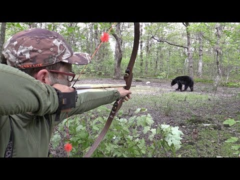 CLOSE RANGE DIY Bear Hunt With Traditional Archery Gear Over Waterhole!