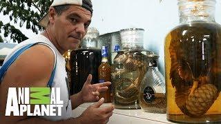 Los animales son sacrificados para la fabricacion de whisky Wild Frank Al rescate Animal ...