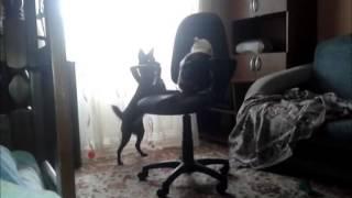 Альма- Пальма. Кошка. 8