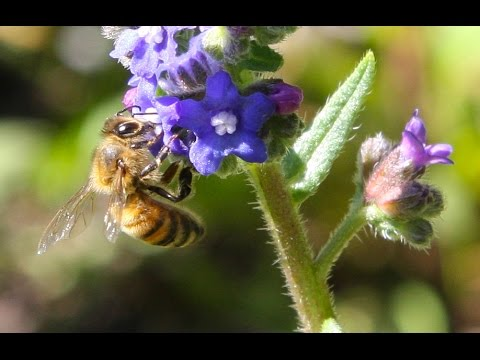 Pollination: Trading Food for Fertilization