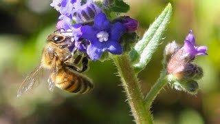 Pollination: Trading Food for Fertilization