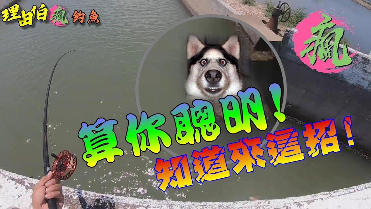 【流溝前打】遇到聰明的魚,直接給我來這一招~厲害~厲害~ 台湾釣り 대만 낚시 Taiwan fishing 前打ち 落とし込み
