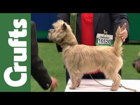 Group Judging (Terrier) and Presentation - Crufts 2012