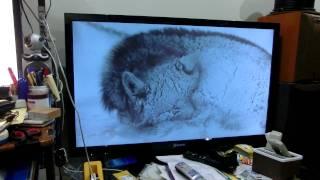 南極物語を見ています。 南極では15匹の樺太犬が取り残され、飢えと寒さ...