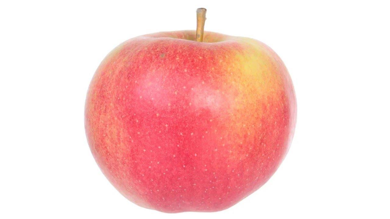 Сорт яблони «Крапач»