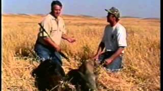 Wild Boar Hunt at Santa Margarita, California