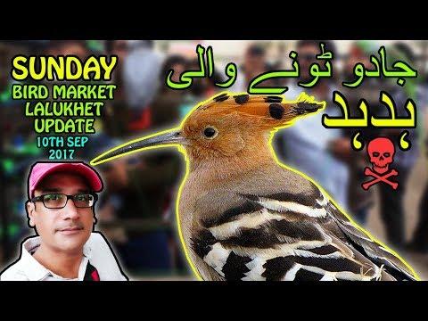 Bird Market Karachi Lalukhet   Talking Parrots   Black Magic Wood Packer   Video in Urdu/Hindi