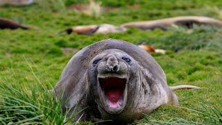 Самые смешные животные Подборка самых смешных видео с животными Ржал целый час