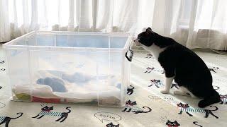 赤ちゃん猫を優しく見守る先住猫