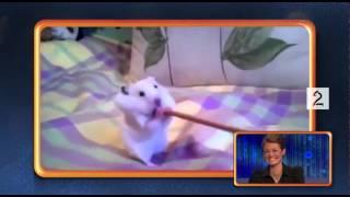 Promo: Klippkompaniet (TV 2)