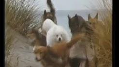 Winalot Dog Food Funny 1980 British Tv Ad
