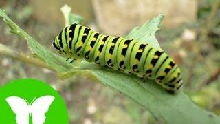 La Eduteca - Los invertebrados