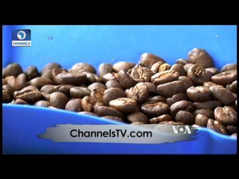 Africa 54: Eye On Nigeria Snails