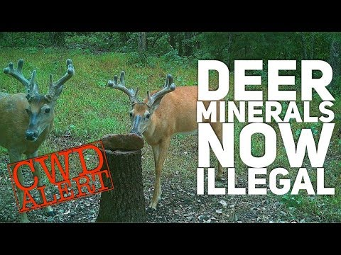 Deer Minerals Against the Law Thanks to CWD  S9  #19