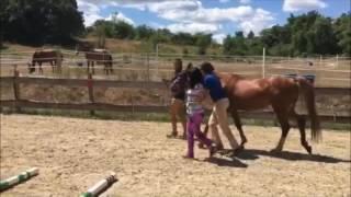 Ivy Street School Horsemanship Elective - Summer 2016