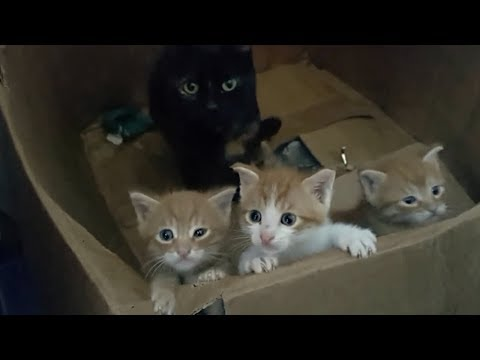 Cute little kittens meowing and talking