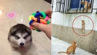 Cute And Funny Cats Dogs Videos Compilation Best Moment Of The Animals 2019  8   Cuteanimalshare