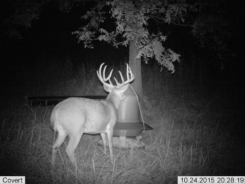 Trophy OKC Metro Bucks and How to Make DeerJerky