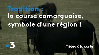 La course camarguaise, symbole de toute une région ! - Météo à la carte
