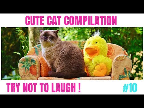 Cute cat compilation try not to laugh #10