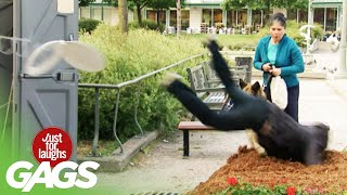 Man Has Horrible Fall!  | Just for Laughs Compilation