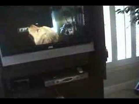 My dog barking at herself barking at the tv youtube Why does my dog bark when i leave