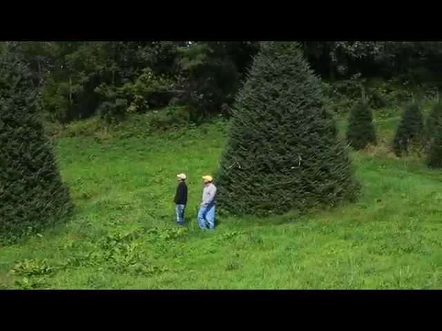 A Christmas Tree Story