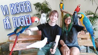VI KIGGER PÅ FUGLE - På ferie i Malaysia