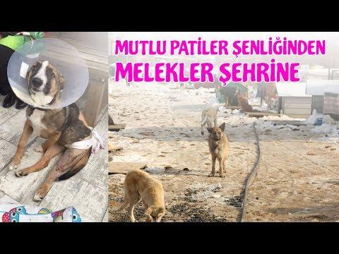 Mutlu Patiler Şenliğinden Melekler Şehrindeki 500 Köpeğe Destek