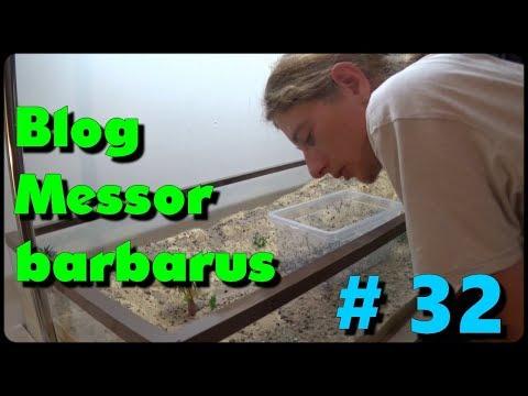 Blog Messor barbarus #32 - Les foreuses