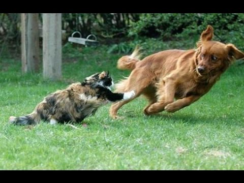 Dog Chasing Cats Youtube