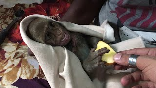 All Of My PETS Almost And Baby MONKEY