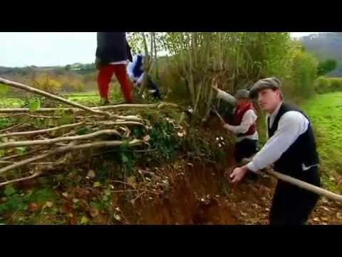 Pleaching Hedgerow with Billhooks, Edwardian Farm