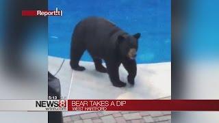Bear takes a dip in West Hartford