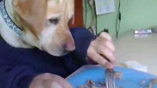 Собака кушает мясо угар смотреть всем