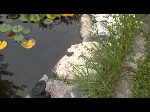 Frogs And Tadpoles (LQ)