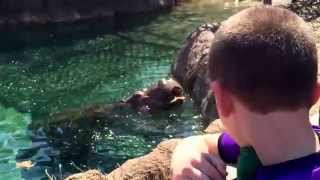 Wonder What It Sounds Like To Hear A Hippo Crunch An Easter Egg Cantaloupe?
