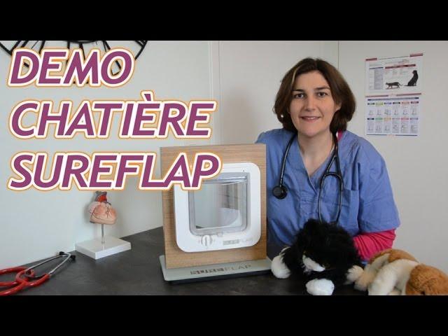 Demonstration De La Chatiere Electronique Sureflap Youtube