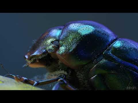 Bugs Theater CGI