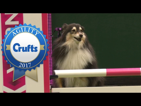 Agility - Crufts Singles Heat - Small (Jumping) | Crufts 2017