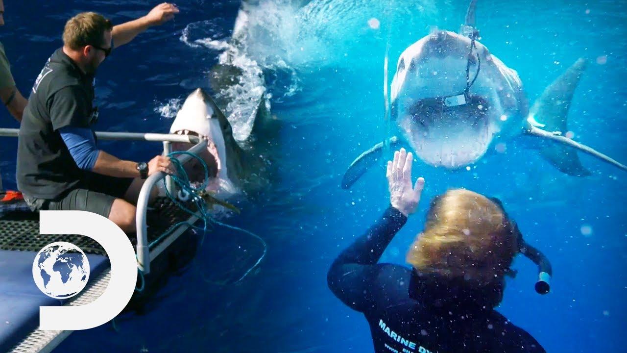 The Most Intense Shark Moments: Closest Calls | Shark Week